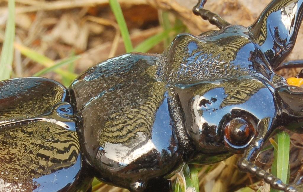 ビットリオ・コスタンティーニ フィギュリン クワガタ ( Vittorio Costantini Figurine Coleoptera Lucanidae )
