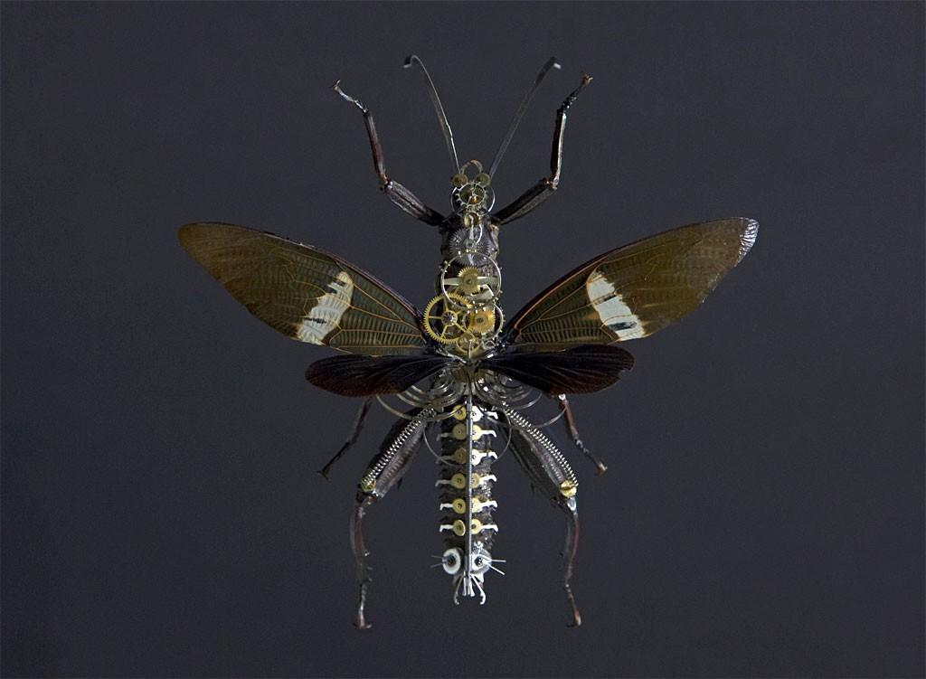 Gaby Wormann - Eurycanta Calcarata ( 大型ナナフシ )