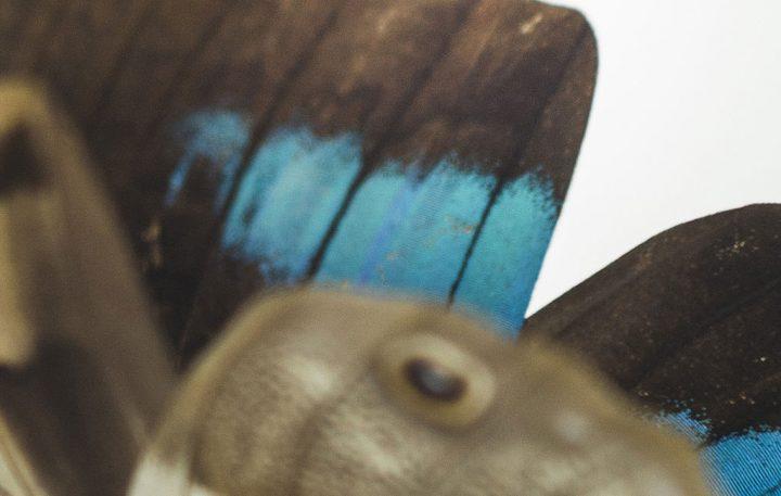 Paul Swan Topen 「時計仕掛け」の蝶