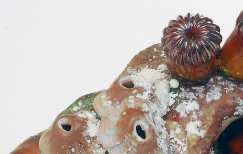 ビットリオ・コスタンティーニ オブジェ ヤドカリ ( Vittorio Costantini Figurine Hermit Crab )